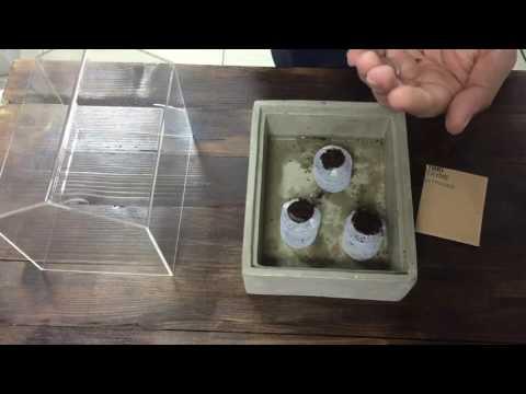 Semina in dischetti di fibra di cocco