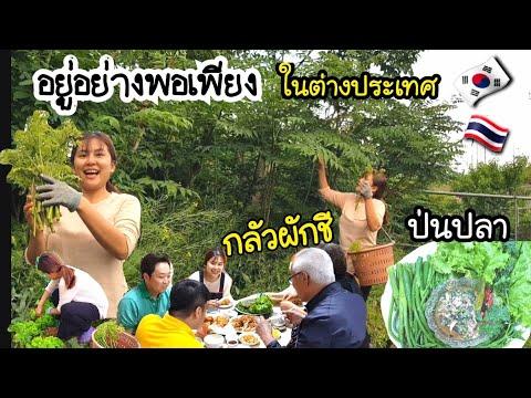 EP.128/เก็บผักเกาหลีในบริเวณบ้านมาทำอาหารไทย/ใช้ชีวิตอย่างพอเพียงในต่างเเดน/อยู่กับธรรมชาติรอบบ้าน/