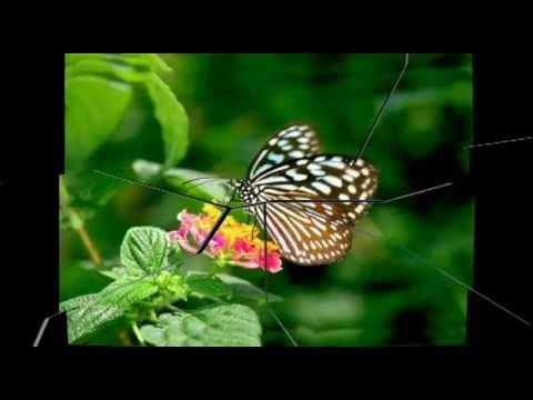 古箏-梁祝之蝴蝶夢