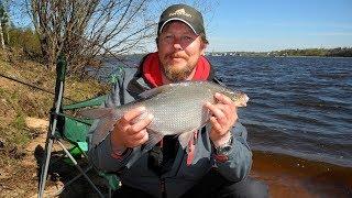 Рыболов нн ловля густеры и подлещика