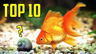 Top 10 Goldfish Tank Mates You Should Try