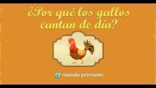 ¿Por qué los gallos cantan de día?