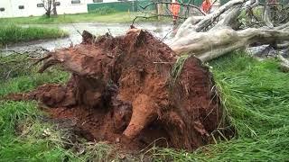 Janeiro registra grande número de quedas de árvore com 13 ocorrências em duas semanas