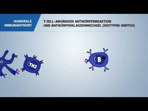 Die Tabletten von den Würmern für die Prophylaxe bei den Erwachsenen die Rezensionen