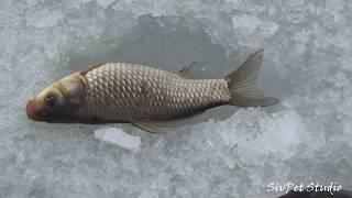 Время для рыбалки в феврале 2020
