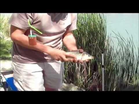 Pesca di video in Karelia su una picca