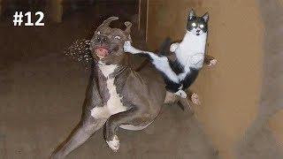 Я РЖАЛ ПОЛ ЧАСА  Смешные Коты и Собаки  ПРИКОЛЫ С ЖИВОТНЫМИ  Cute Cats #12
