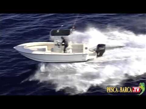Cattura di una pesca di carpa di video