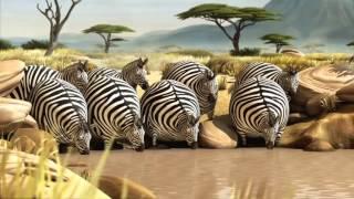 귀여운 뚱뚱한 동물들 010-2820-2525