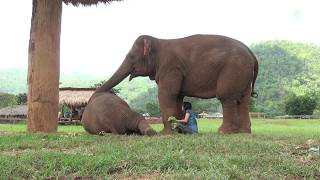 Faamai wants Lek to sing a lullaby to baby elephant, Thong Ae | Kholo.pk