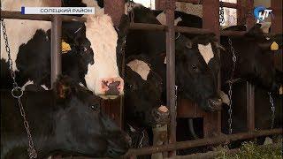 О развитии молочной отрасли поговорили новгородские аграрии