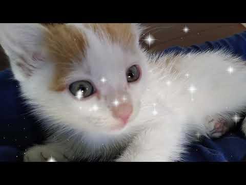 Kitten Plays With  Balls  - Kuzya Kitty
