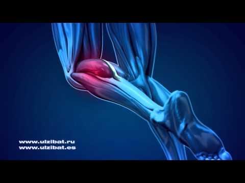Développer la force des muscles