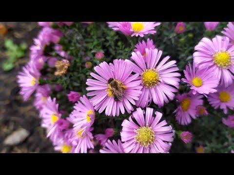 10 октября пчелы собирают пыльцу