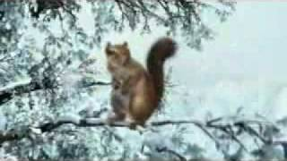 Squirrel stops forest fire