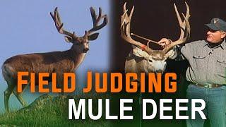 Deer scoring - the easy way! How to Field Judge Mule Deer with Mike Eastman