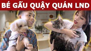 Bé Gấu đòi quậy Quán Cafe Mèo của Linh Ngọc Đàm và ăn thử Mực Khổng Lồ 7Kg | Oops Banana V10g 163