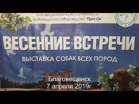 """ВЫСТАВКА СОБАК.""""Весенние встречи"""" в Благовещенске.//Dog show."""