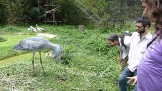A humble chat with a Shoebill. (Balaeniceps rex)