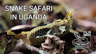 Snake Safari in Uganda (wildlife documentary by Living Zoology)