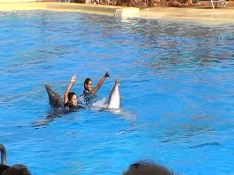 Οι εντυπωσιακές ικανότητες των δελφινιών