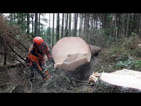 GARDEN AND FOREST Original YouTube Video! Chainsaw Husqvarna 560 XP