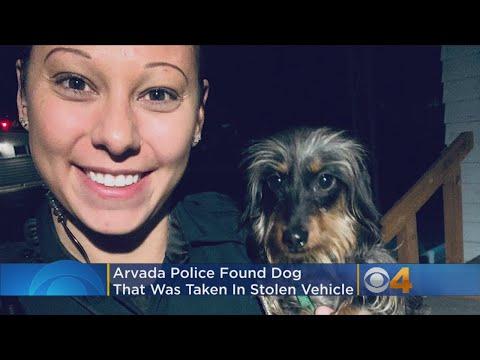 GOOD NEWS: Police Find Puppy That Was Inside Stolen Car