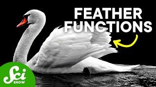 7 Wacky Ways Birds Use Feathers