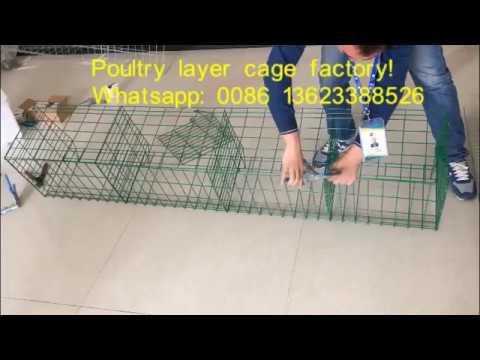 Unguento ng halamang-singaw sa mga pinaka pako sa mga ina nursing