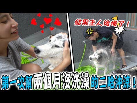 主人嘗試幫狗狗洗澡, 卻全身濕透