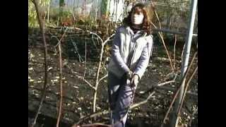 Смотреть онлайн Как обрезать виноград осенью для начинающих