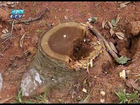 সোহরাওয়ার্দী উদ্যানে গাছ কাটা ও রেষ্টুরেন্ট স্থাপনের উদ্যোগের বিরুদ্ধে শিগগির আইনী পদক্ষেপ |ETV News