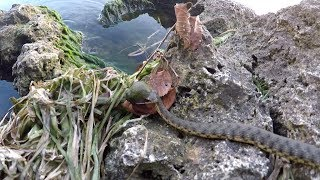 Ловится ли щас рыба на ставрополье
