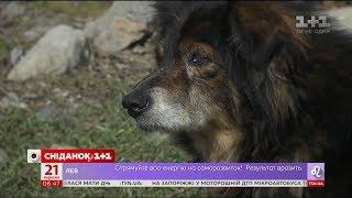 Через загрозу чуми в Україні знищують бездомних тварин