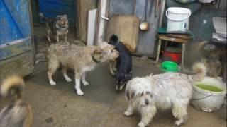Dramat ludzi i zwierząt - potrzebna pomoc
