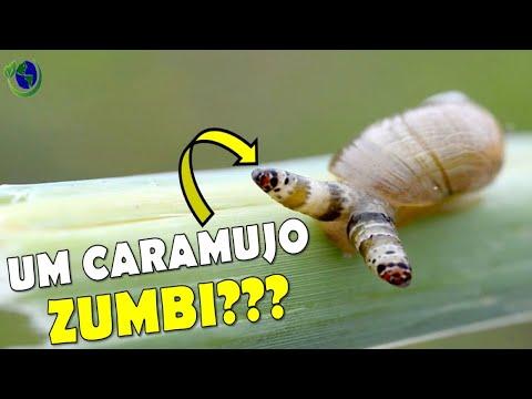 Hogyan kell kezelni az epehólyag parazitáit