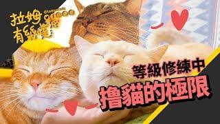 ►拉姆有幾噗◄ 奴性堅強的撸貓制霸!被咬也要摸┃Cat's petting challenge ♧