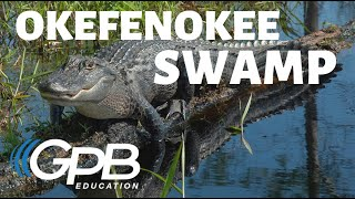 Okefenokee Swamp | Georgia's Physical Features