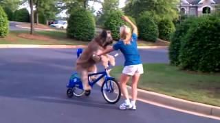 Научили собаку ездить на велосипеде.mov
