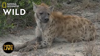 Safari Live - Day 379 | Nat Geo Wild