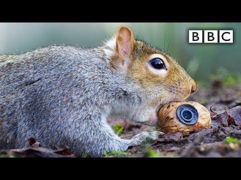 Veverka krade umělý ořech