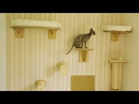 Kletterwand für Katzen