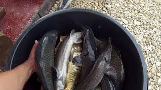 Платная рыбалка в подмосковье горьковского направления
