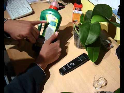 Orchideen pflege Teil 2 (Phalaenopsis)