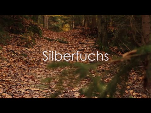Silberfuchs [Kurzfilm]