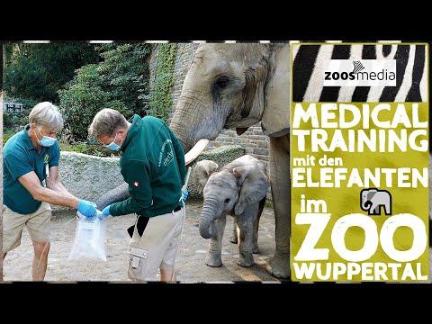 Film von Zoos.media: Medical Training bei den Elefanten