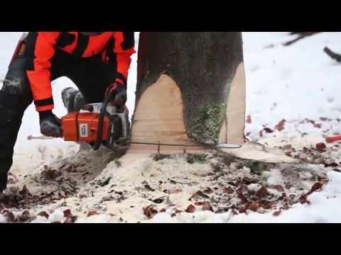 Sichere Holzernte mit der Motorkettensäge