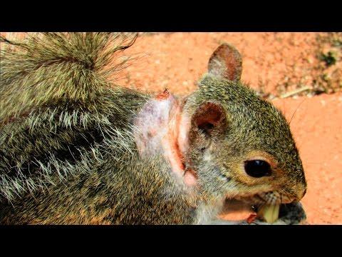 Féreghajtók enterobiasis esetén