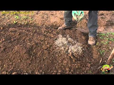 Mezzi da un fungo su un piede