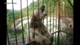 Приколы с животными   Fun with animals №152